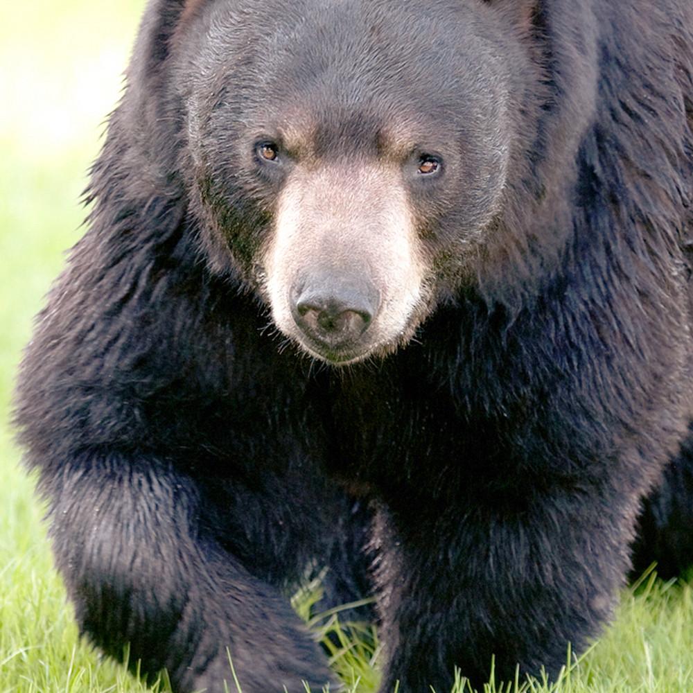 Bears 004 ktkpvt