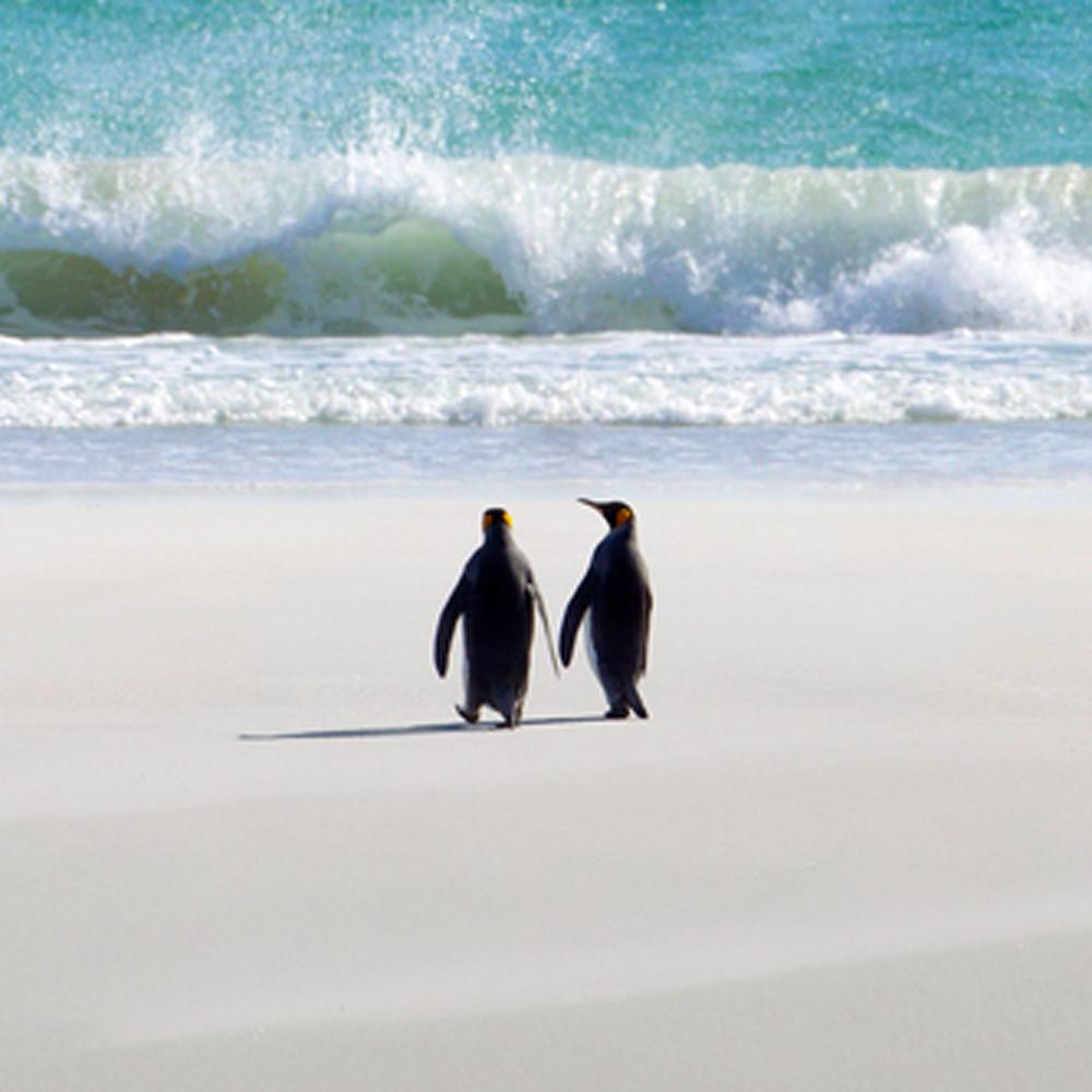 Penguins 002 wnhnbe