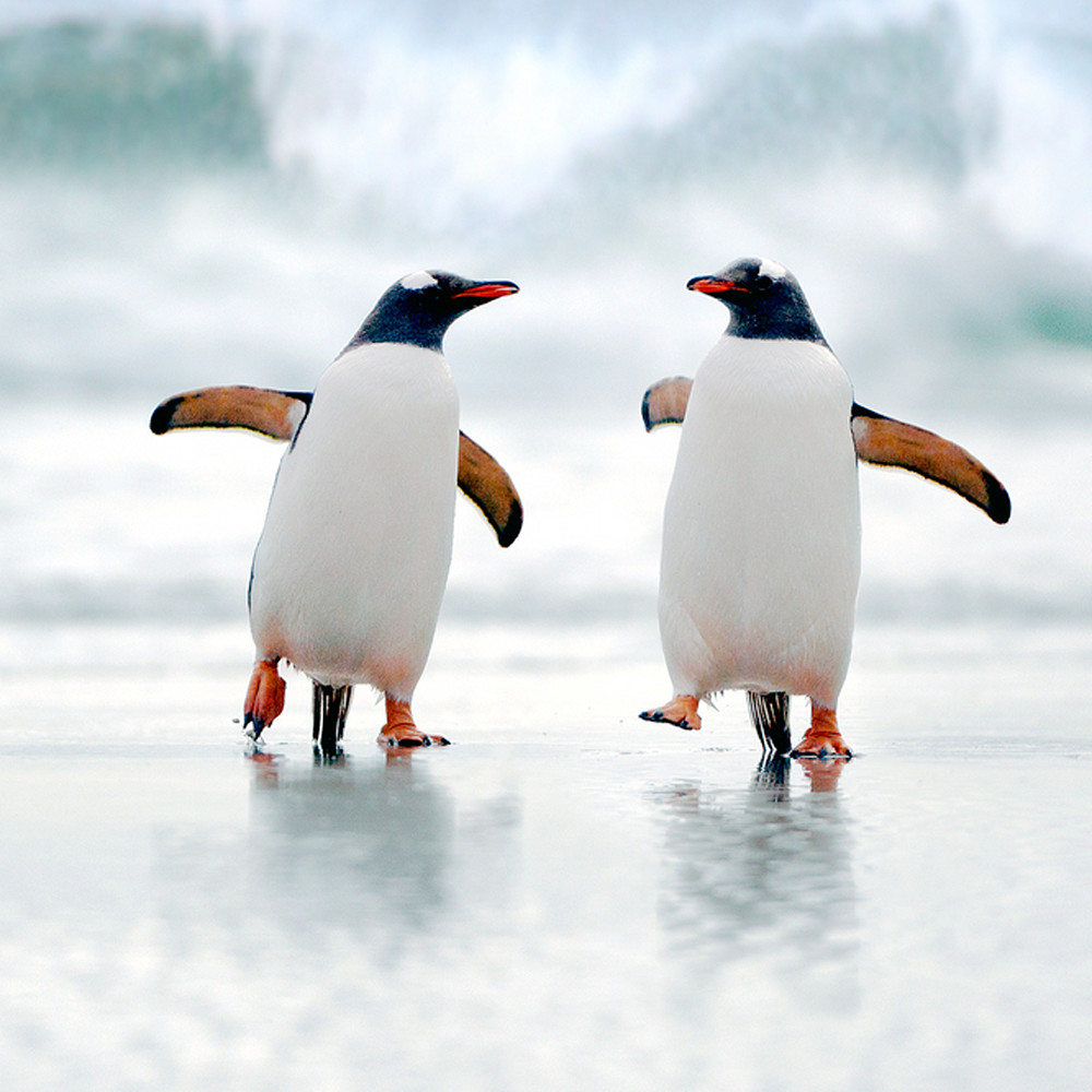 Penguins 005 bbo7pl