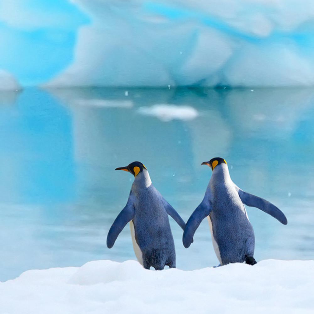 Penguins 009 bilgyl
