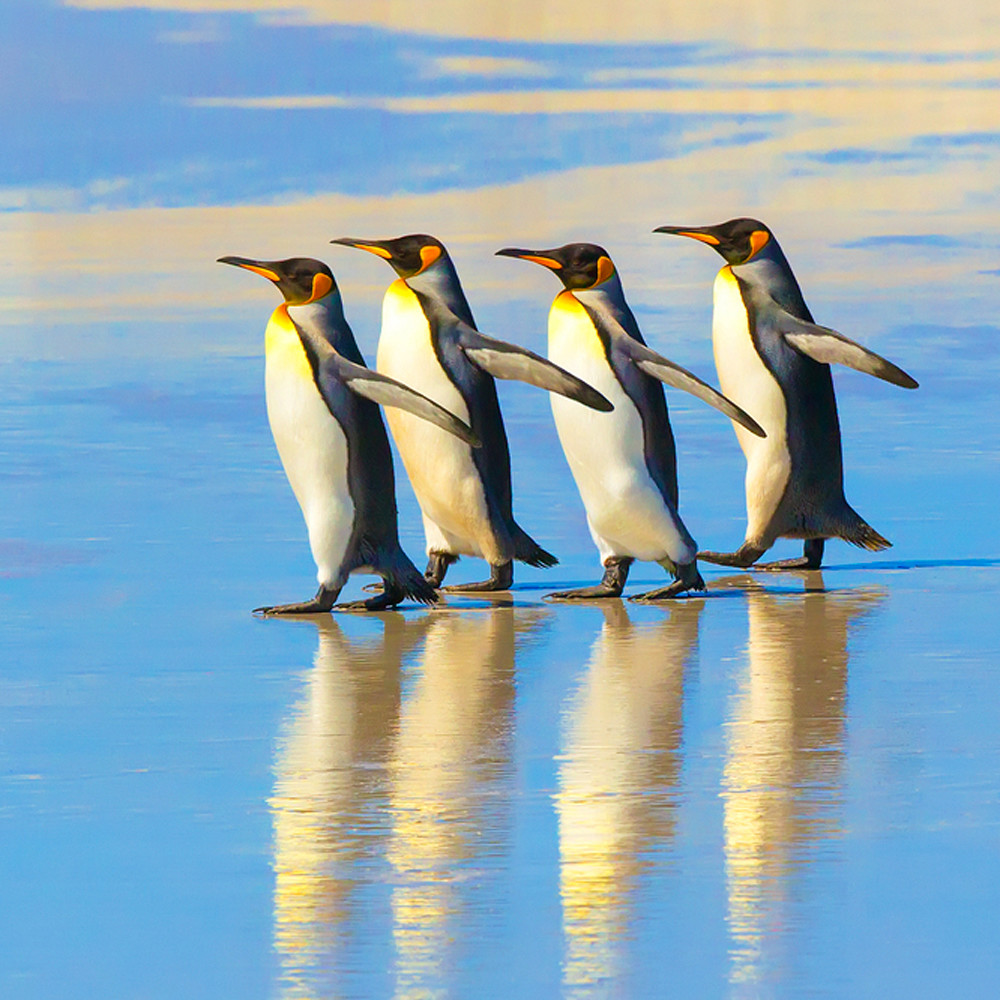 Penguins 022 eyxulg