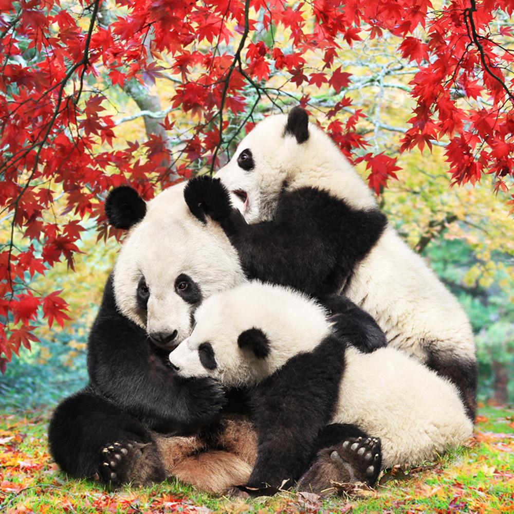 Pandas 014 q8laf9