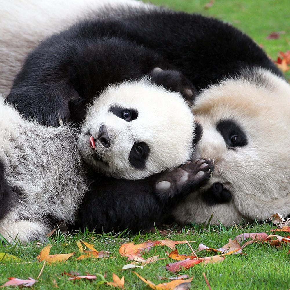 Pandas 019 mvyexl
