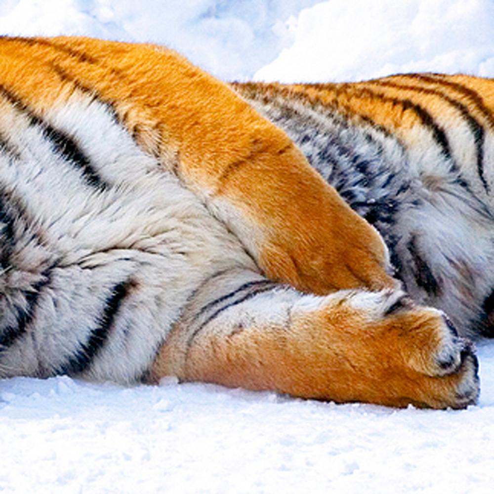 Tigers 020 fjwrap