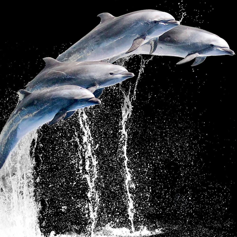 Dolphins 002 nmdsxk