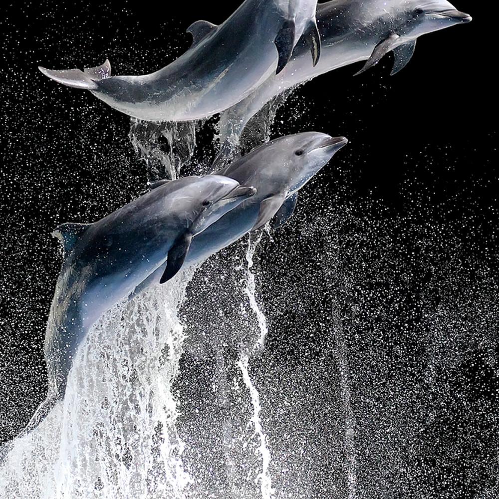 Dolphins 001 wtnp1c
