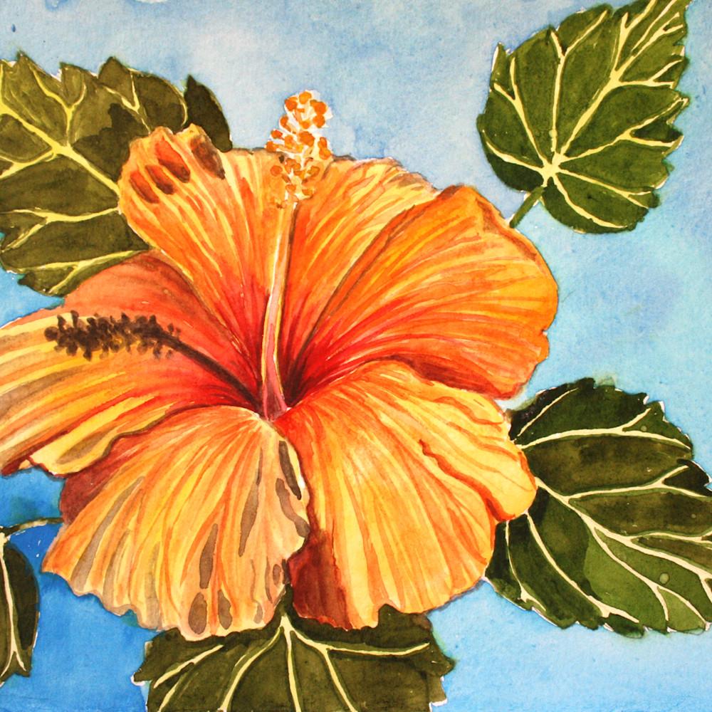 Hibiscus iwn5c9