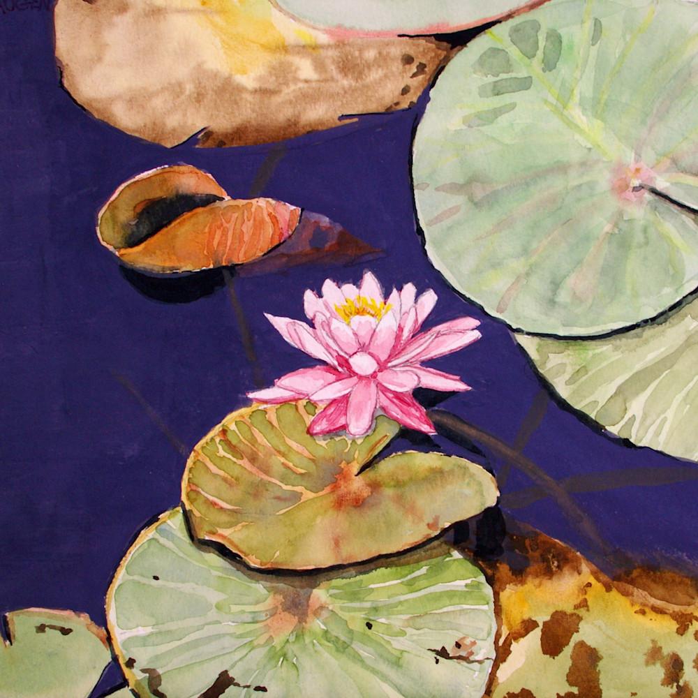 Water lily blossom eyujvi
