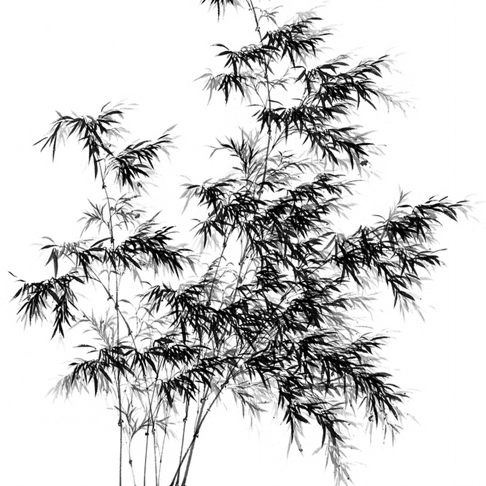 Bamboo 005 i2r2yh