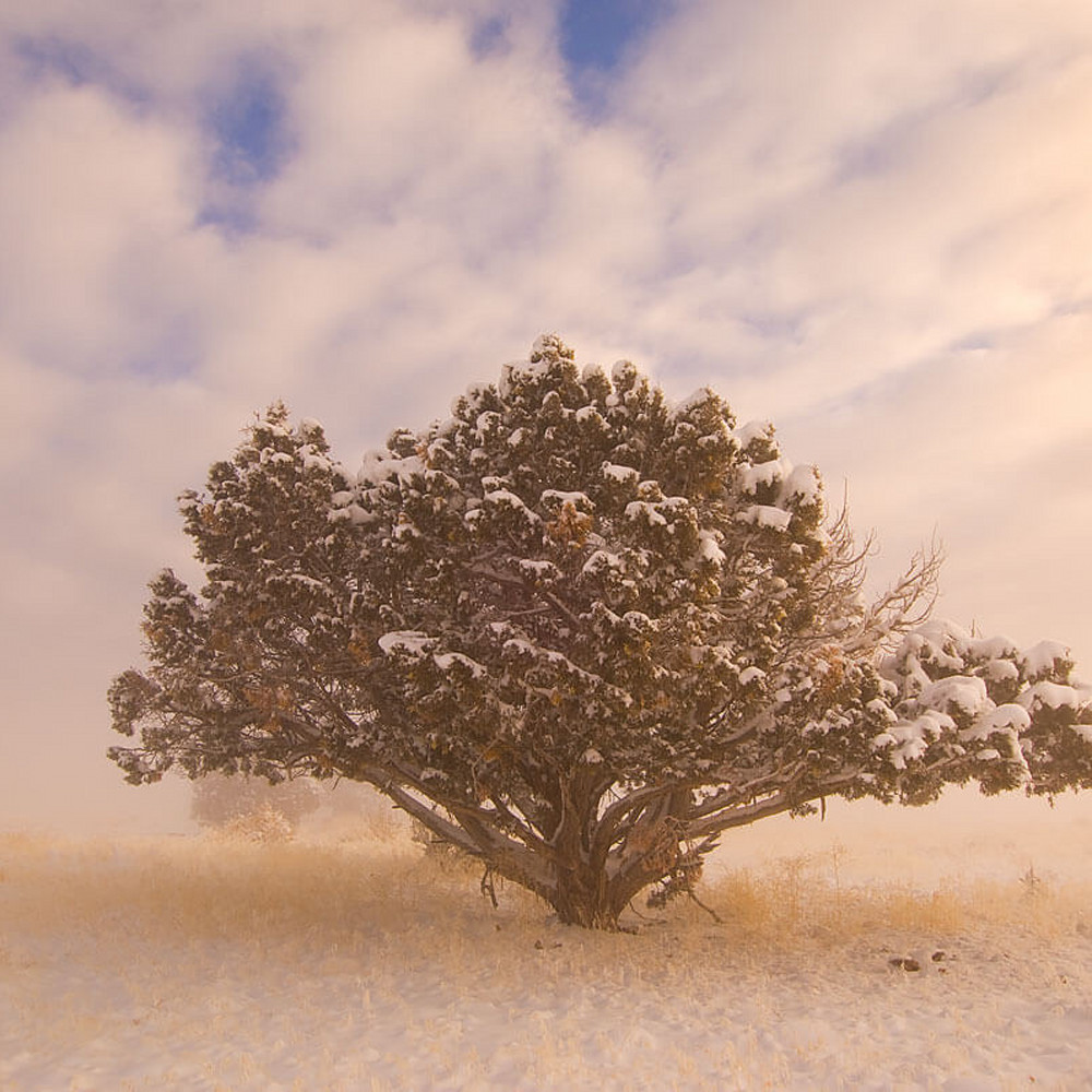 Snow tree xmlead