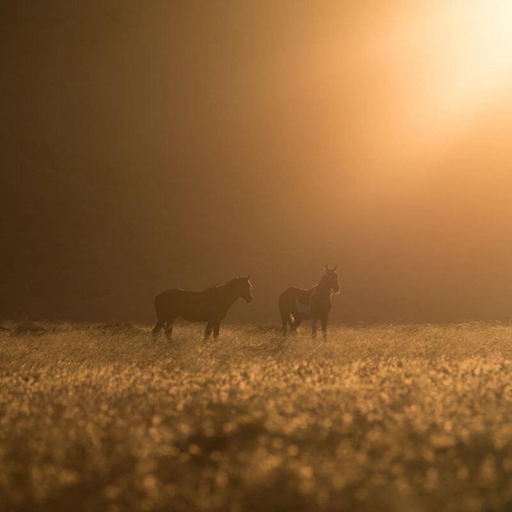 Wild horses utah southwest fine art xmsgew