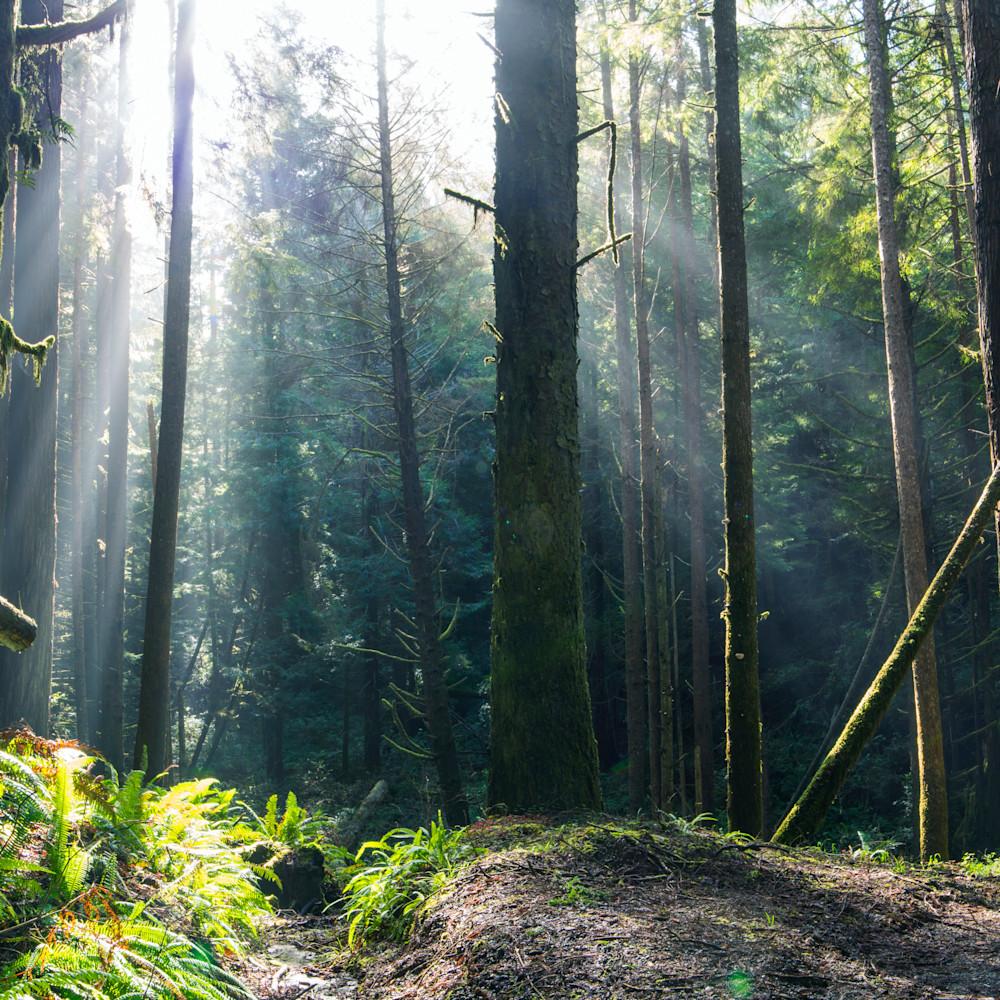 Forest rays xtr96j