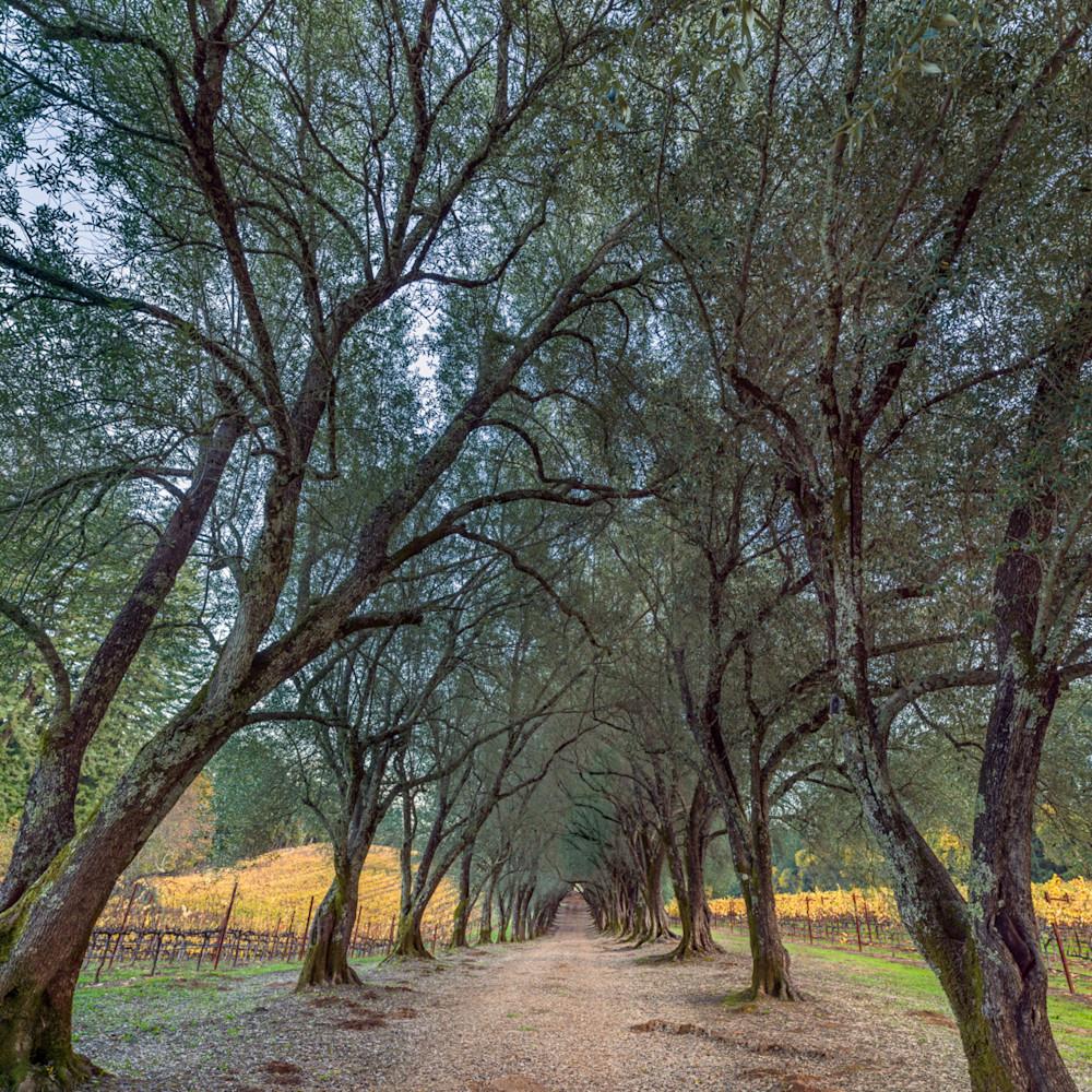 Ancient grove wxw1dn