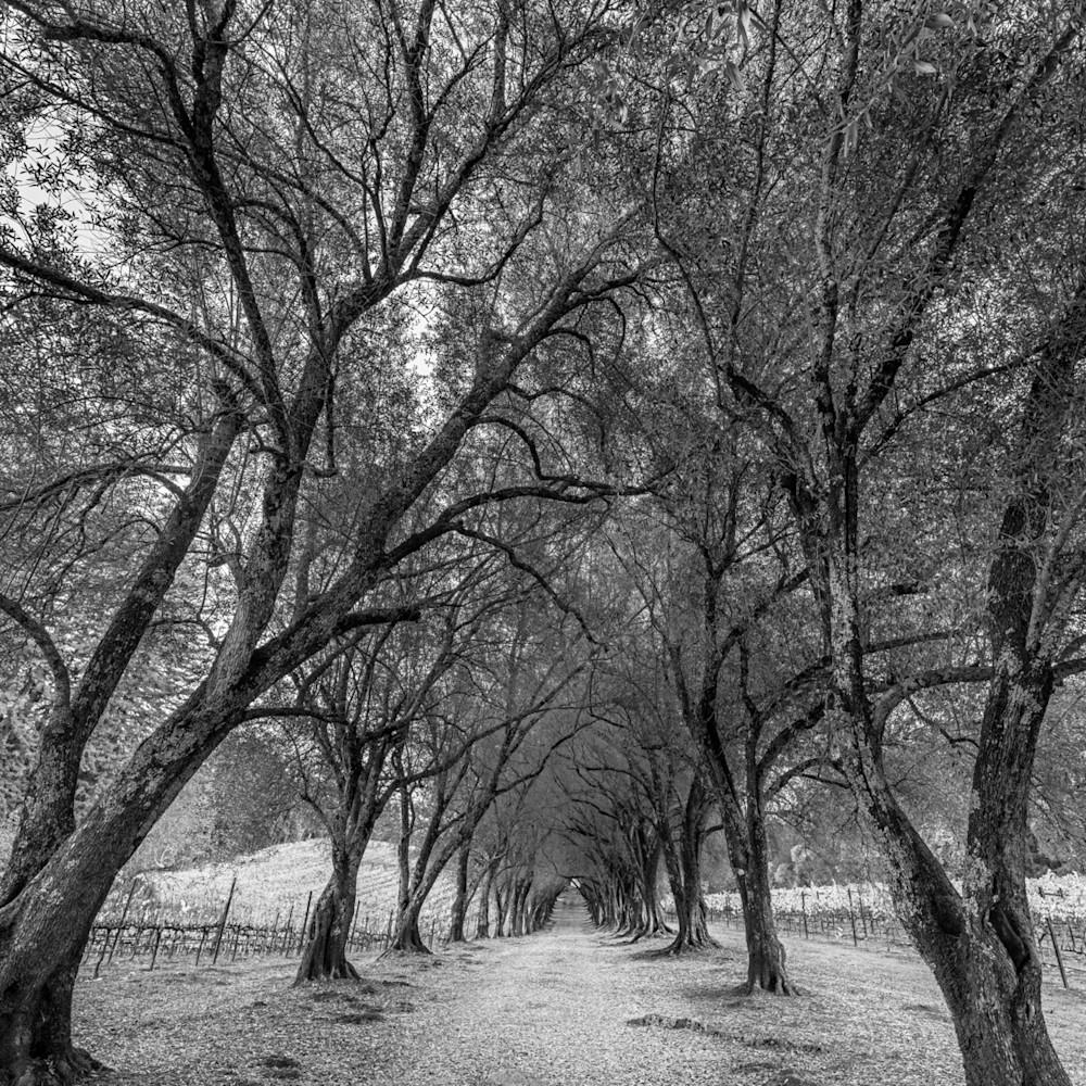 Ancient grove i rxjtdt