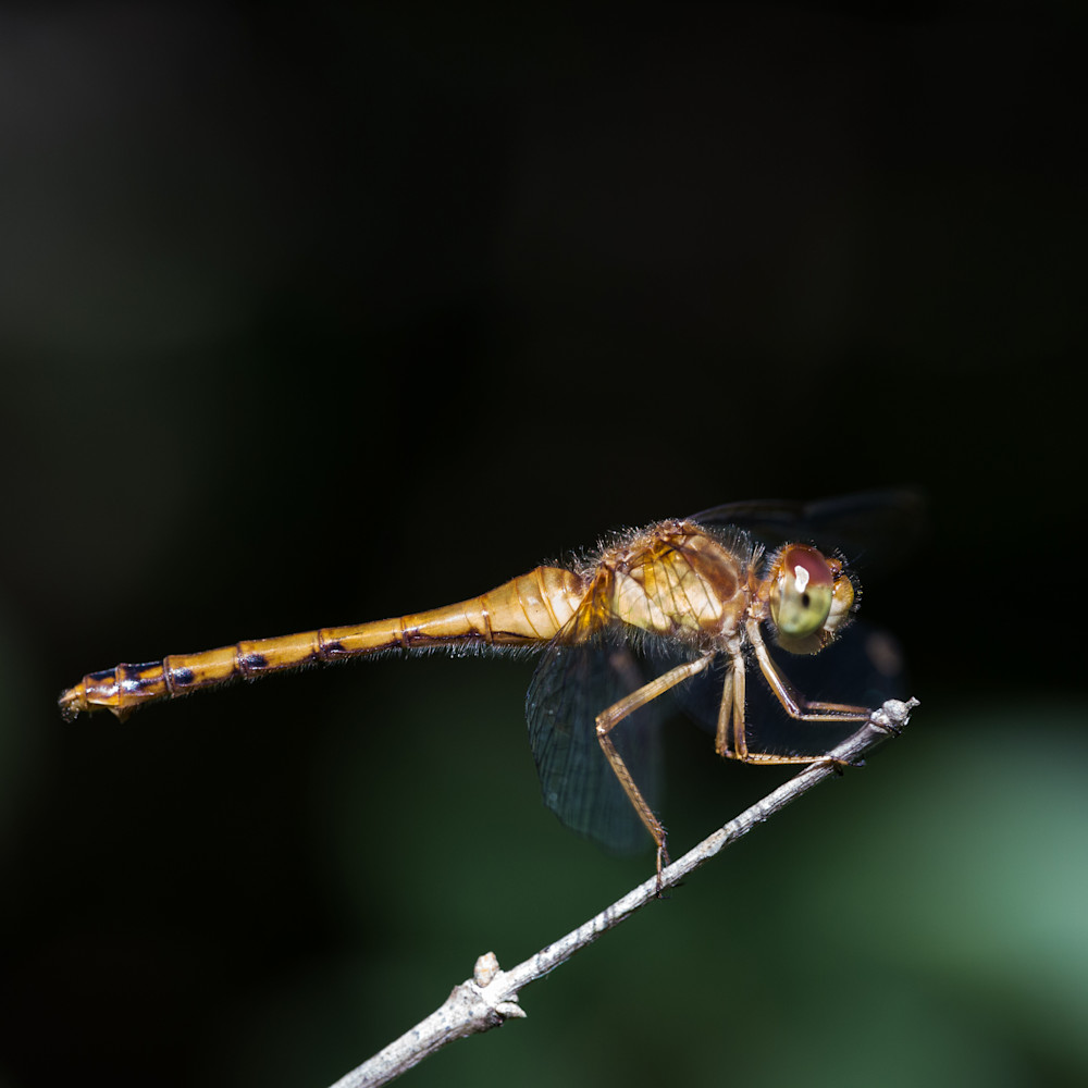 20140905 dragonfly 00016 gvfjyj