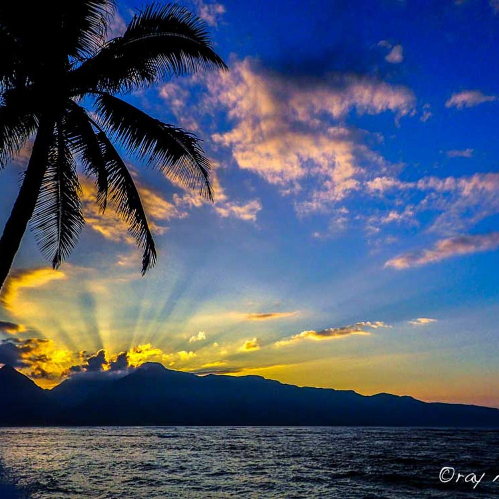 Palm silhouette snfdte