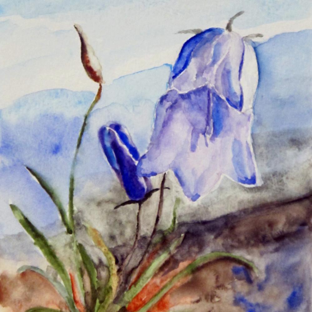 2015077 greenland bluebells 2 krkayd