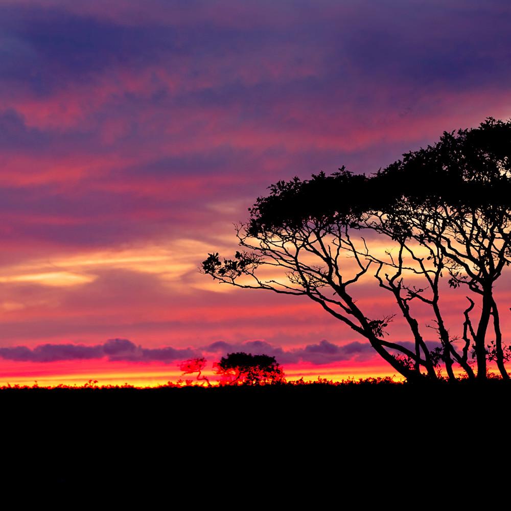 Baobabs sunset panorama 20x50 gyoegc