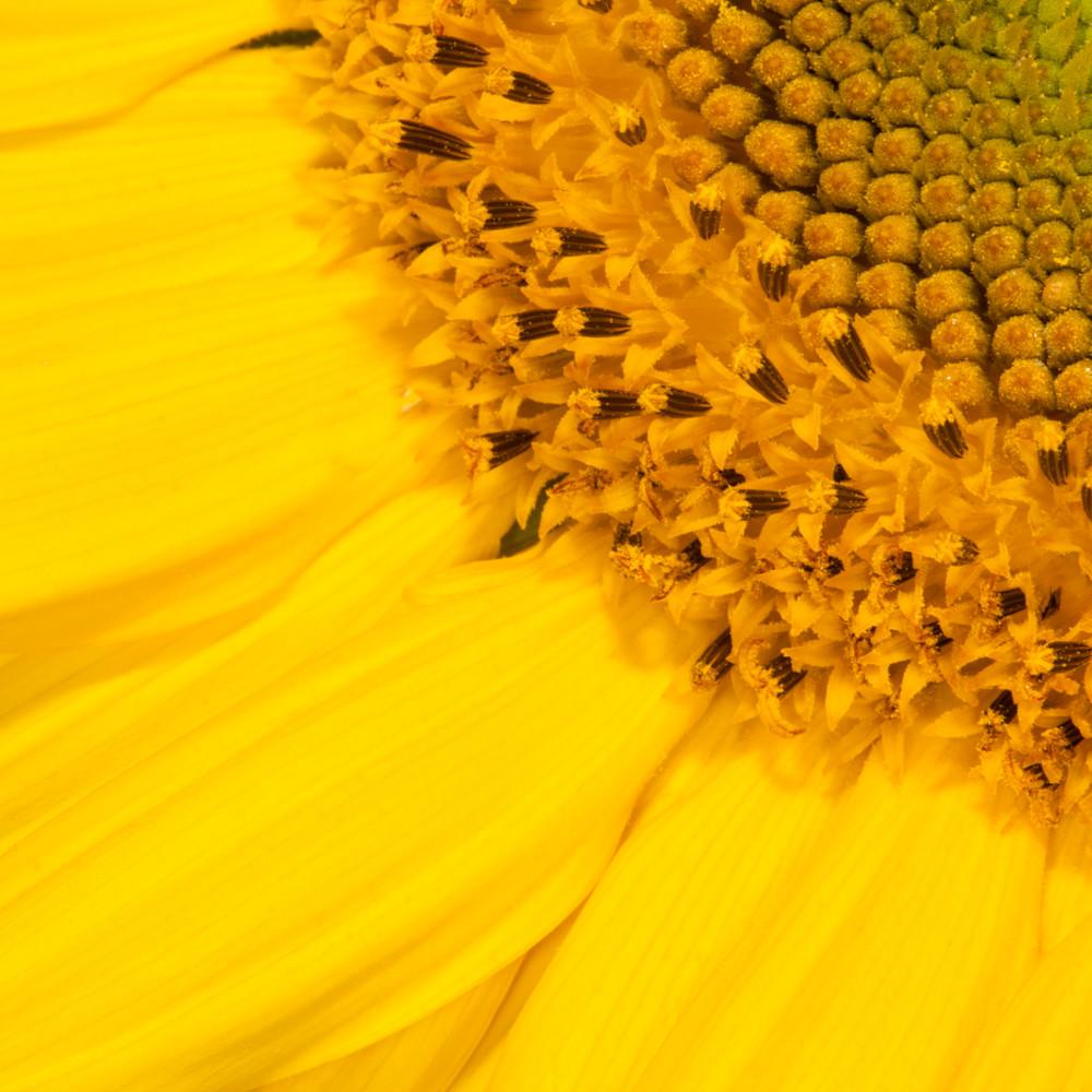 Sunflower 29643 edit ahukse