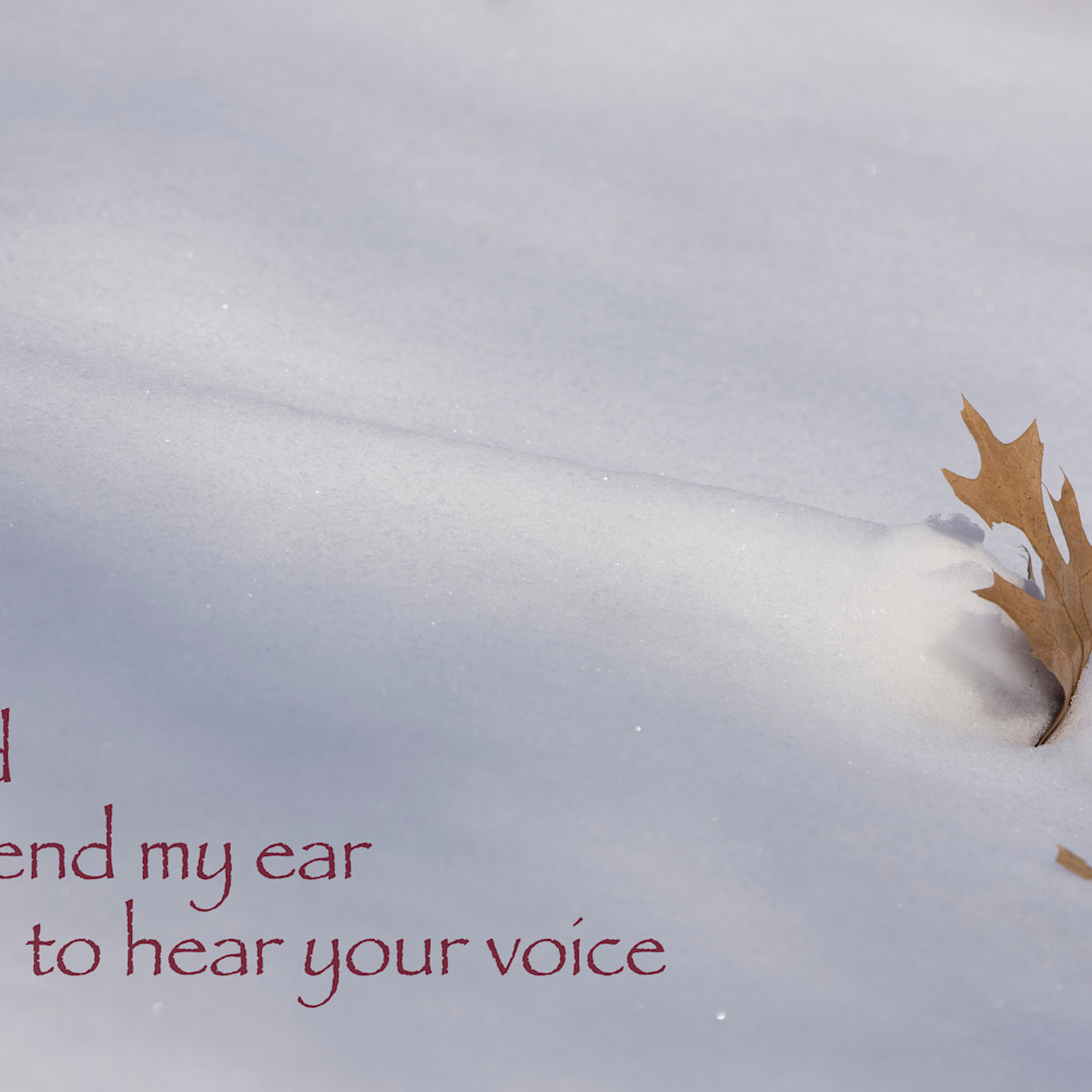 J53q 8 blown snow and oak leaf egetfy