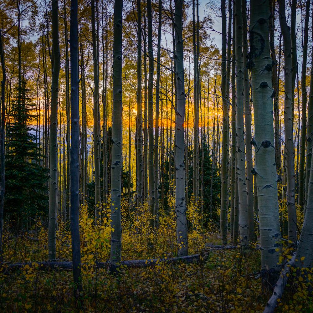 Fall aspens at sunset 02  hitg6r