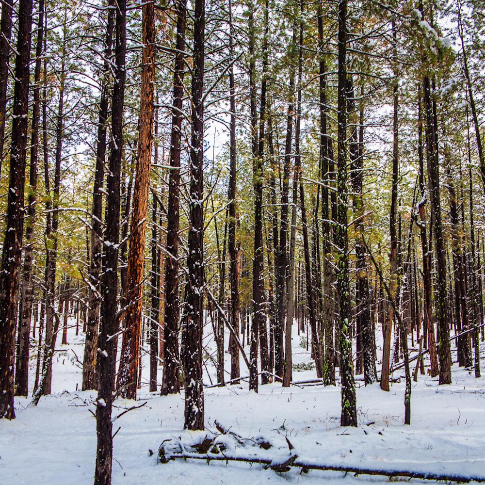 Pines jemez wilderness 3848 mj6ugx