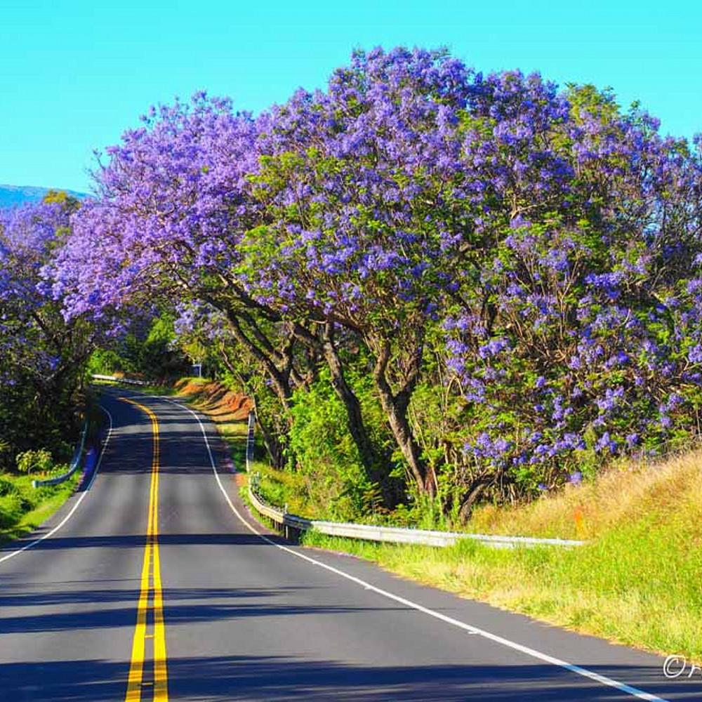 Purple road bzbebc