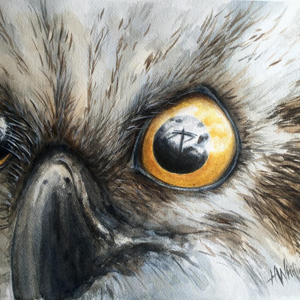 Osprey eyes ifn8ny