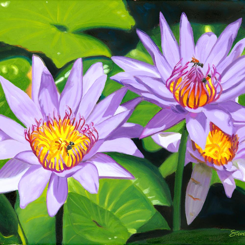 Lotus flowers gmypsa