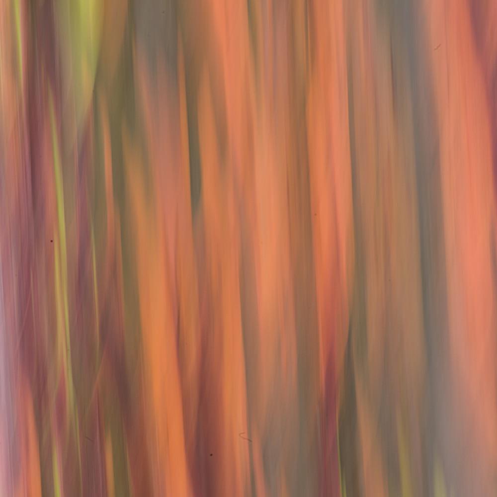 Rainbow eucalyptus iv h0mayj