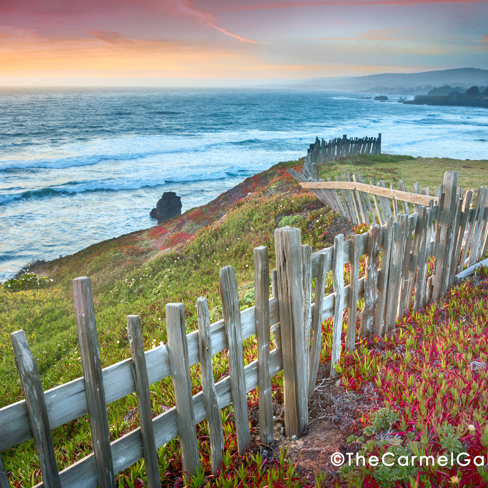 Fence and flowers sea ranch n0laop