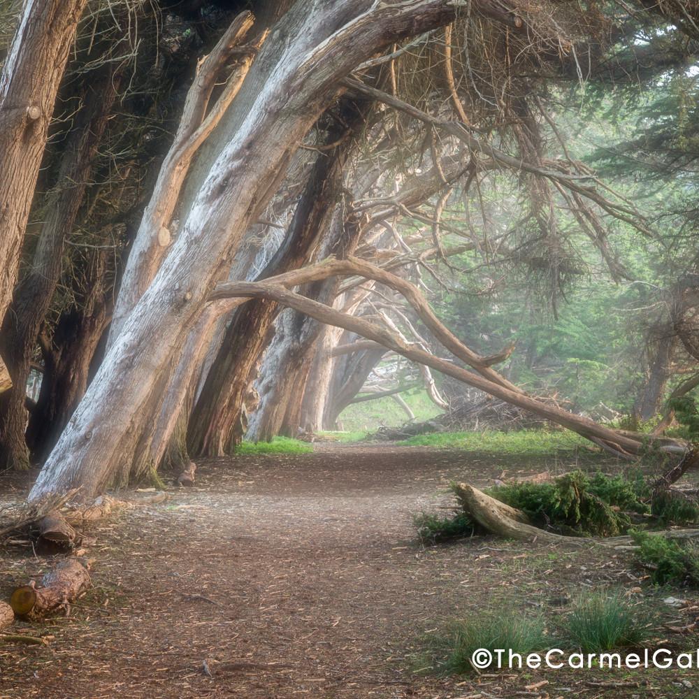 Cypress hedgerow ii zwgzp1