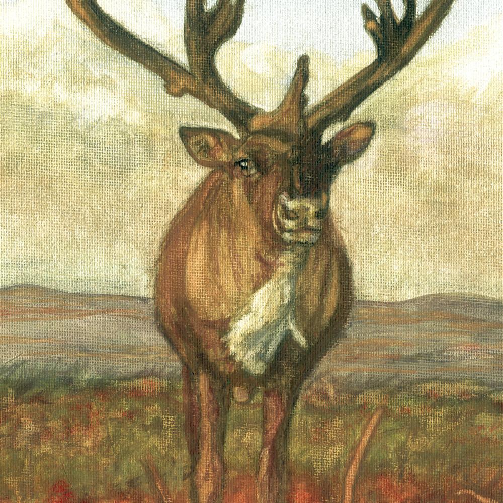 Caribou standing tall j0kao6