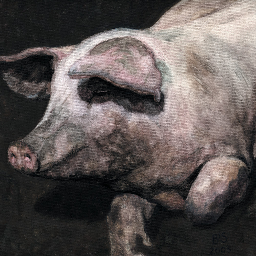 Pig loving the mud cbldus