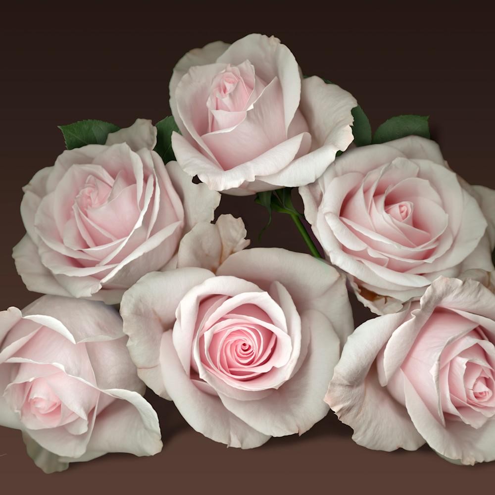 080103 ahern pink rose pyramid brown bgd v3si3z
