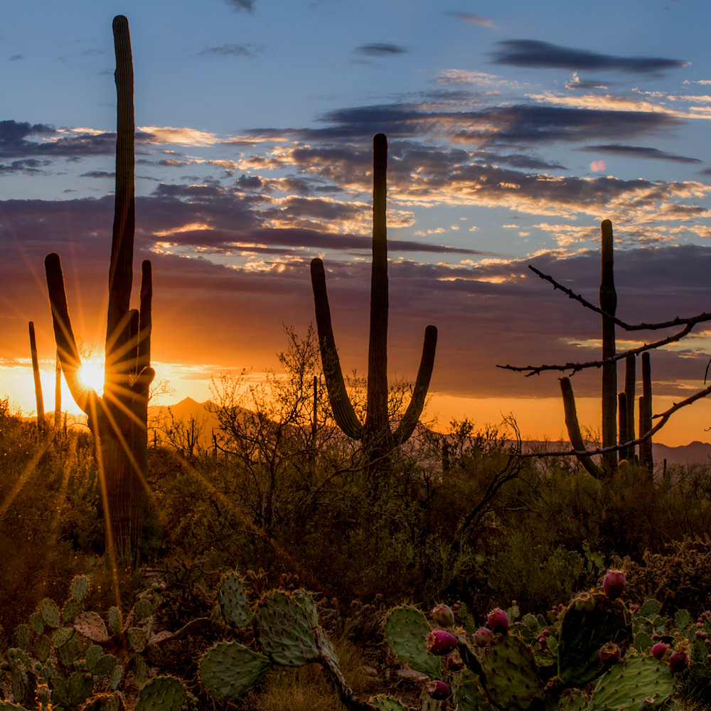 Dp448 summer sunset panoramic yl2nre