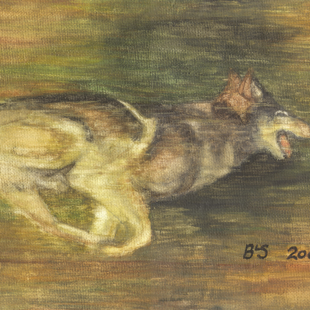 Wolf in pursuit fawgup