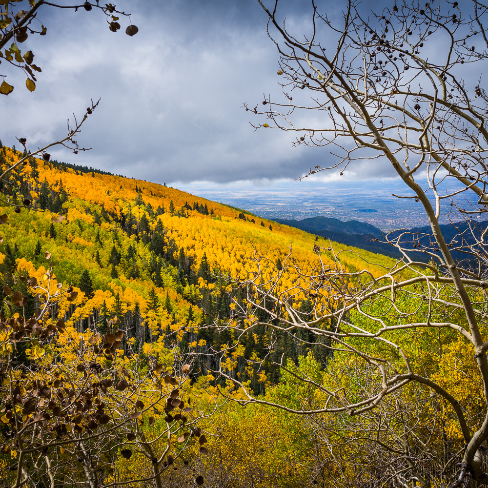 Aspen forest above santa fe 3513 uxtoik