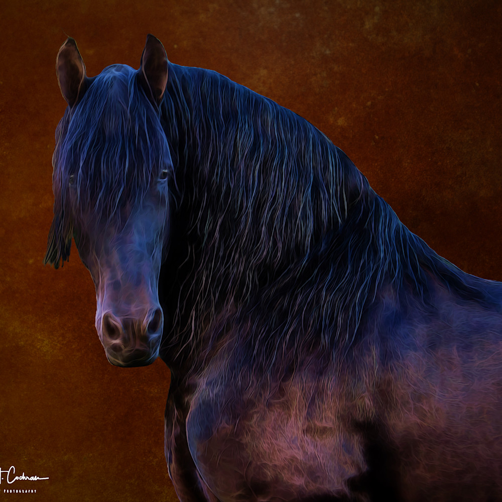 Portrait of fresian hue65w