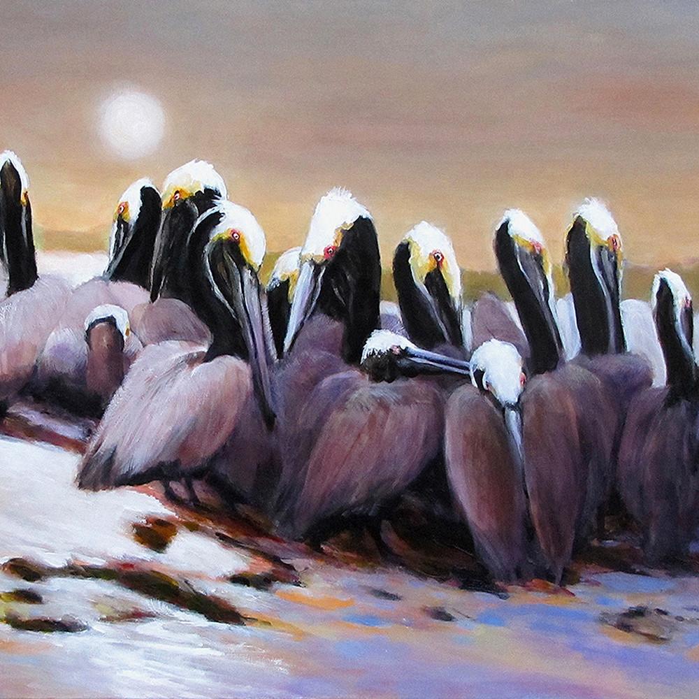 Brown pelicans charles wallis rtd8qa