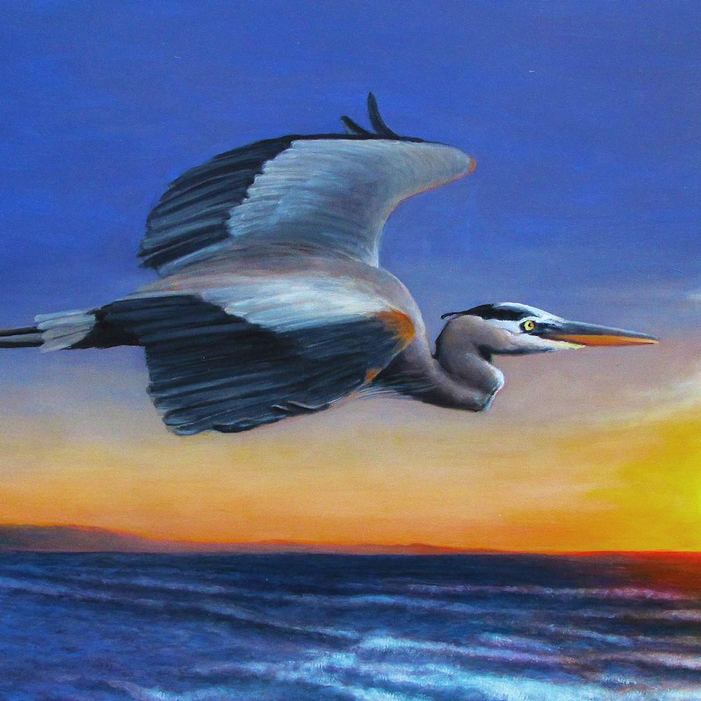Great blue heron sunrise flight jhmpme