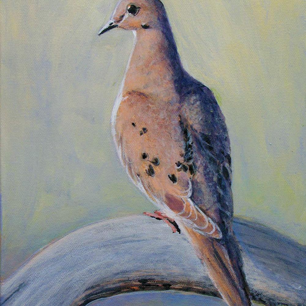 Mourning dove aa sucnmz