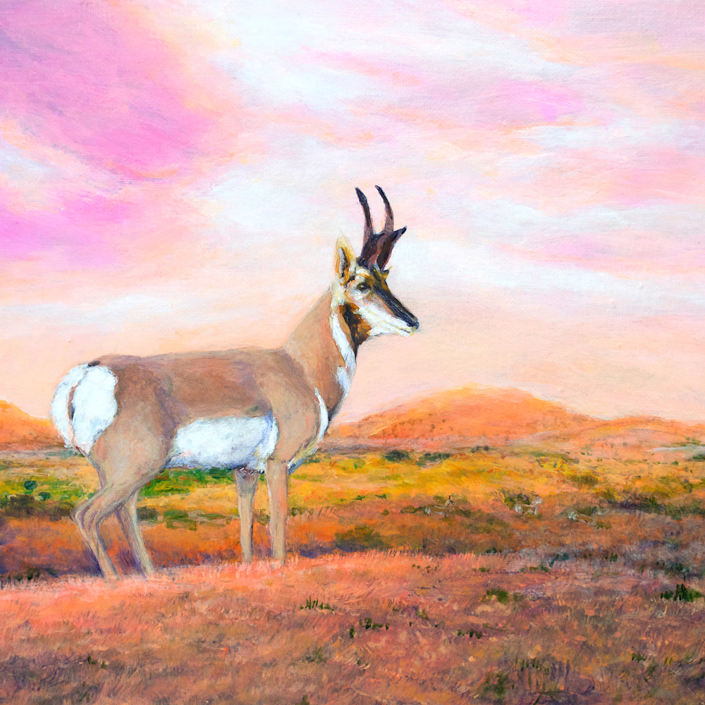Pronghorn antelope sfexue