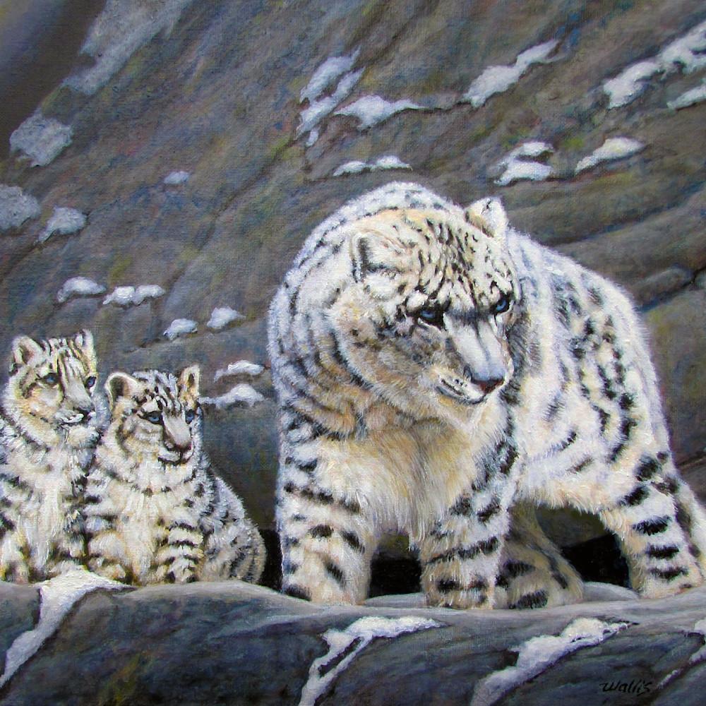 Snow leopard and cubs znpf4h