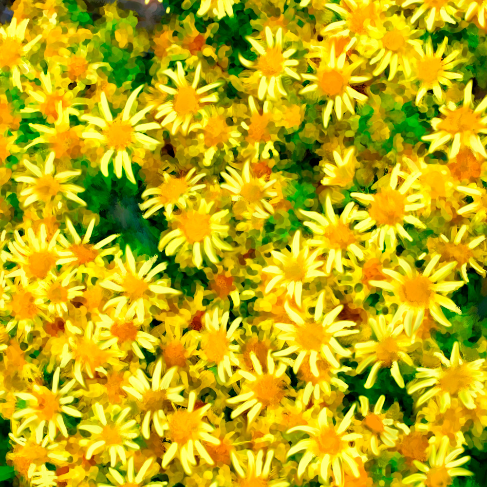 Readyn to print scottish yellow flowers smart painted speckel oil brush bak smear 2 02 30x40 ready to print wbqgnw