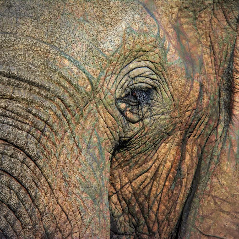 Macro elephant lncouk