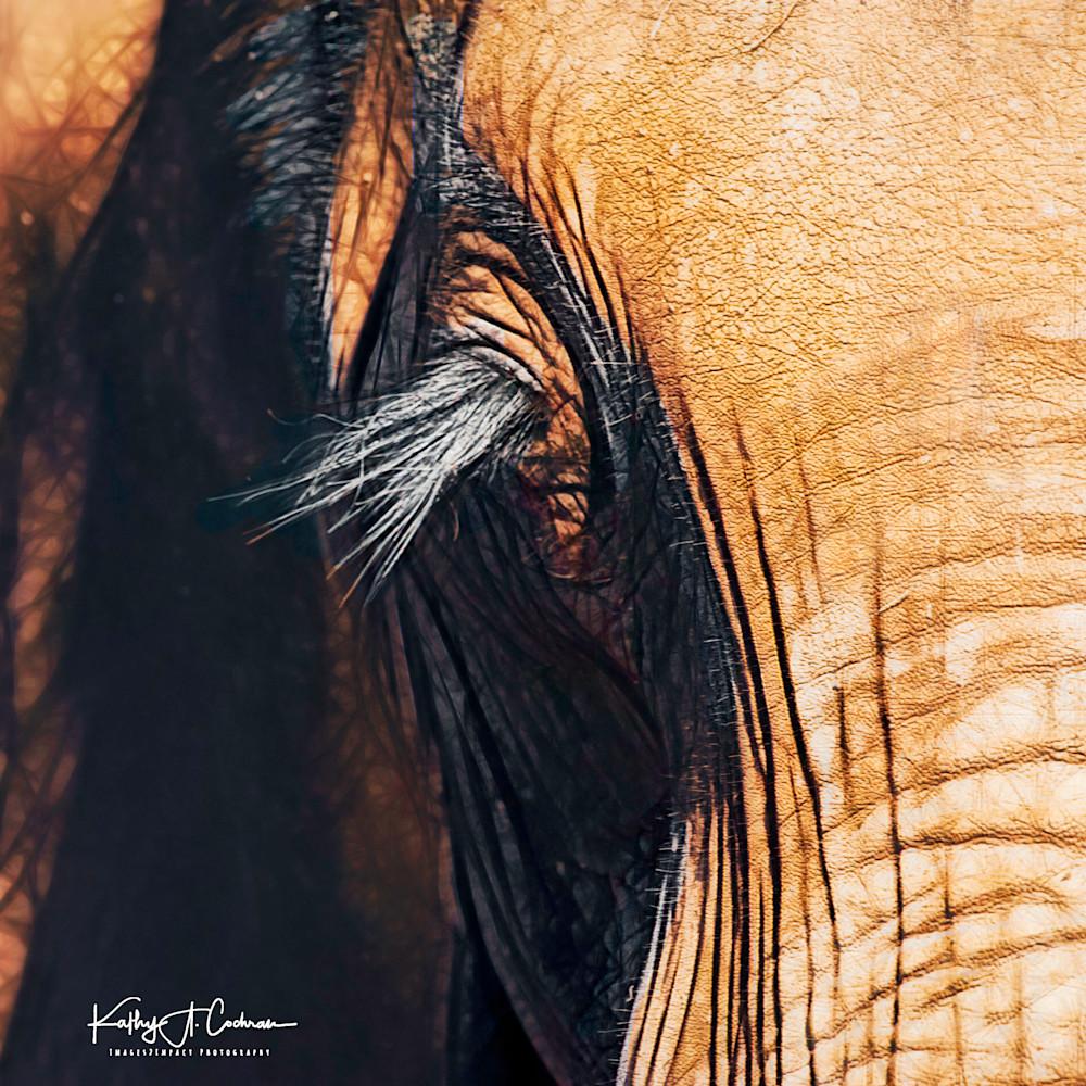 Elephant lashes nbfedg