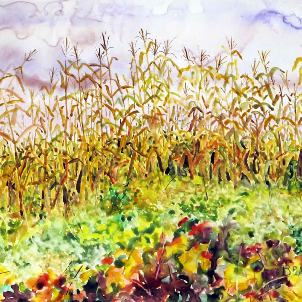 2015002 edge of corn field et0ygx