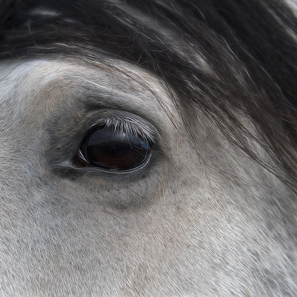 Eye of the horse 2 dklgdt