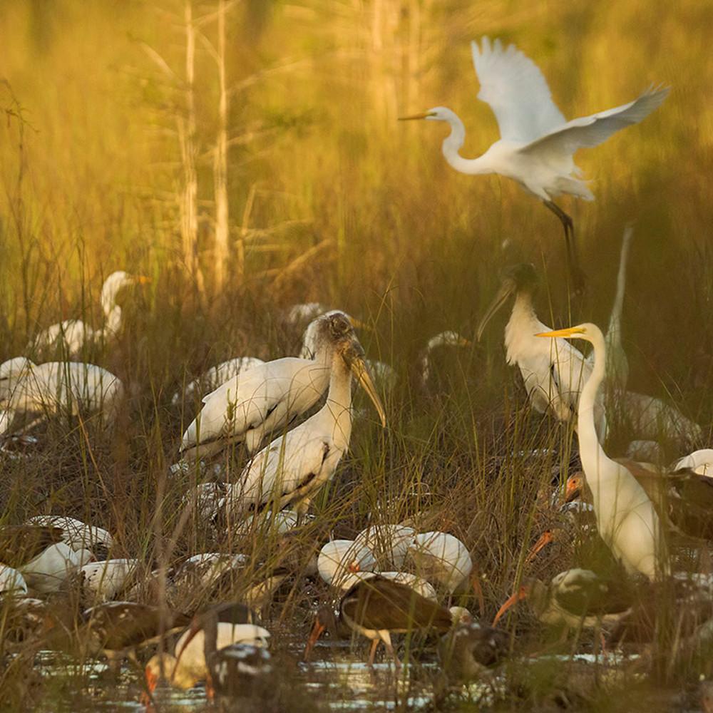 Dreaming of birds lclbkt